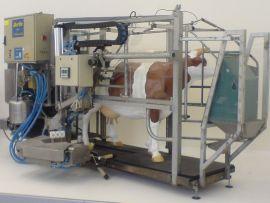 Ordenhas robóticas em fazendas leiteiras