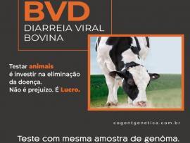 BVD - Diarreia Viral Bovina