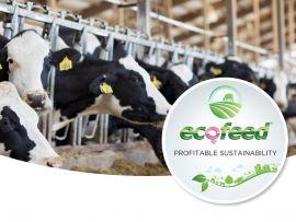 Eficiência alimentar: a nova ferramenta para uma pecuária de leite sustentável