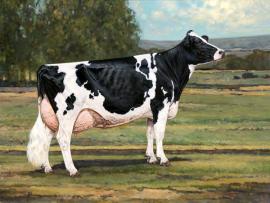 Criando a vaca perfeita do futuro