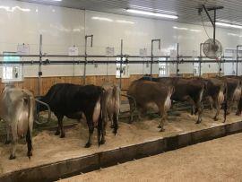 Os 3 pilares de fazendas leiteiras altamente eficientes