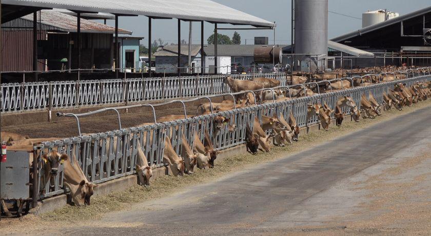 CEPEA: Preço do leite deve renovar recorde em setembro/20