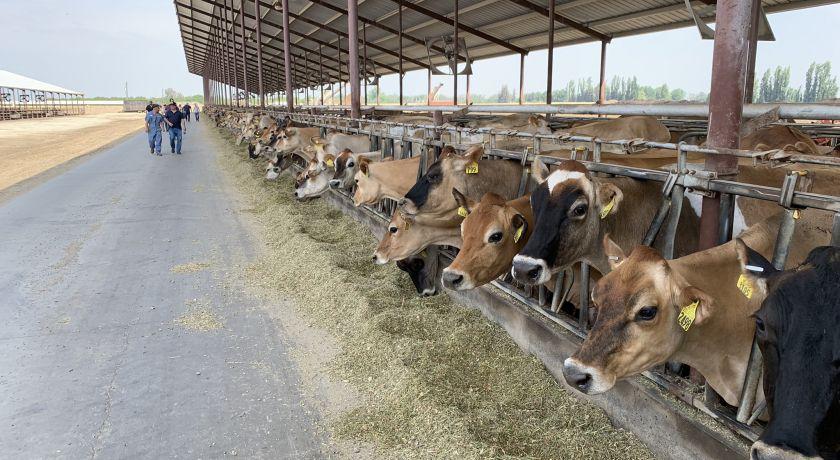 Preço do leite em alta minimizou o impacto do aumento nos custos de produção