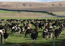 Produção mundial de leite deve se manter pressionada, diz USDA