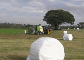 Pré-secado é opção barata para a pecuária