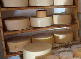 Regiões produtoras de queijos artesanais são reconhecidas pelo Governo de Minas