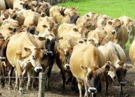 Santa Catarina amplia em 223,5% a produção de leite em 21 anos
