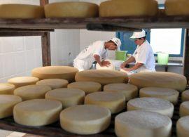 Produtores de queijo de Goiás recebem o Selo Arte