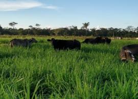 Pecuaristas do sul do Pará anunciam suspensão do fornecimento de leite