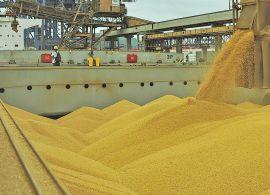 Suspensão da Tarifa Externa Comum para milho e soja pode reduzir custos de produção de leite