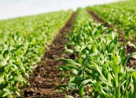MAPA: acordo para fomentar a inovação de pequenos e médios produtores rurais