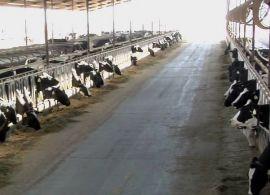 CNA apresenta plano de incentivo ao leite