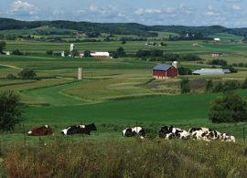 Número de fazendas de leite americanas diminuiu em 2018