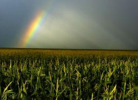 Perspectiva climática: não deve faltar chuva para o milho safrinha
