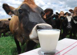 Com custos de produção elevados, oferta de leite segue limitada
