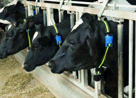 Estresse térmico: quais os impactos causados na produção leiteira e a importância do monitoramento