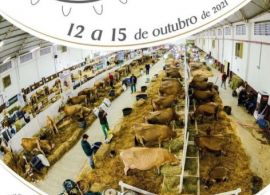 Exposição de gado Jersey de Braço do Norte/SC será realizada de 12 a 15 de Outubro