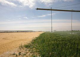 A maior fazenda leiteira do Egito vai ficar ainda maior