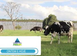 Produtor de leite orgânico pode lucrar 50% a mais em relação ao leite convencional - conheça o case de sucesso!