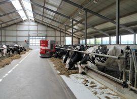 Perdas em fazendas de leite nos EUA podem exceder U$ 2,85 bilhões devido ao COVID-19
