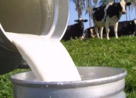 Produtores fazem greve contra baixo preço do leite
