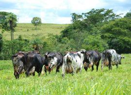 Evolução da produção de leite sob a ótica do Censo Agropecuário