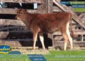 Leilão da Cabanha Gema e Agropecuária Arapari reforça a valorização do gado Jersey