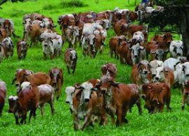 CEPEA: Preço do leite captado em junho é recorde da série histórica do Cepea