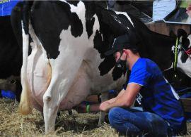 RS: Número de produtores de leite caiu pela metade em 6 anos